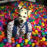 Puppy in the ball pool