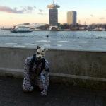 Spot in Amsterdam – Adam tower