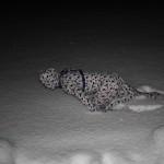 Bounding through the snow 1