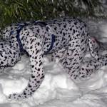 Brrr!! STILL shaking off the snow!