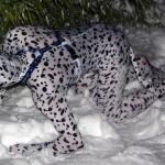 Brrr!! Shake off the snow