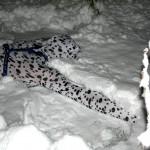 Spot making a Snow-angel