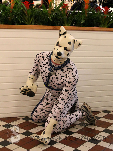 Puppy Begging for votes *wags*